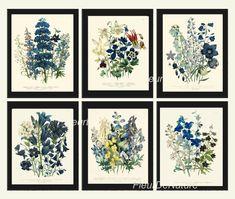 Botanical Print Set of 6 Prints Unframed Antique Blue Flowers Wildflowers Home Room Decor Wall Art Nightwing, Framed Botanical Prints, Flower Chart, Blue Delphinium, Summer Plants, Bathroom Wall Art, Bathroom Colors, Bathroom Ideas, Botanical Flowers