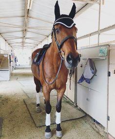 Basic Rules About Horseback Riding For Beginners Enjoyable Sport - Art Of Equitation Equestrian Boots, Equestrian Outfits, Equestrian Style, Equestrian Fashion, Horse Fashion, Cute Horses, Pretty Horses, Beautiful Horses, Types Of Horses