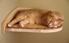 Discounted Corner Climber small defect by MountainCatTrees on Etsy, $85.00