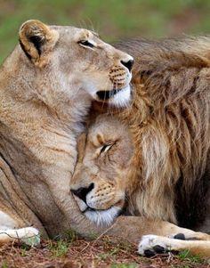 King & Queen Status❤