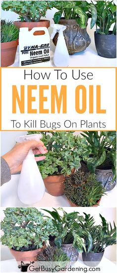 , Neem oil insecticide is an effective and natural way to get rid of bugs on houseplants, or battle tough insect pests out in the garden. , Neem Oil Insecticide: What Is It, And How To Use Neem Oil On Plants Insecticide For Plants, Natural Insecticide, Plant Bugs, Plant Pests, Garden Insects, Garden Pests, Design Thinking, Oil Garden, Pot Jardin