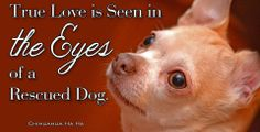 I have 4 rescue dogs and 1 rescue cat. True love......