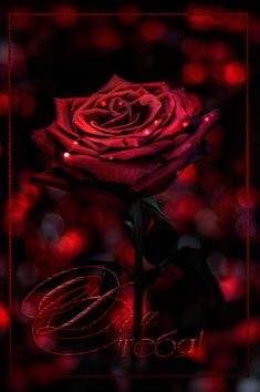 Gothic flowers, black and red roses, red black, black roses wallpaper, cros Beautiful Roses, Red Flowers, Beautiful Flowers, Bouquet Flowers, Vintage Flowers, Gothic Flowers, Colorful Roses, Flowers Nature, Beautiful Pictures