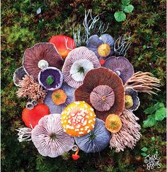 jill bliss forages flora to form magical mushroom medleys - - on daily wanderings across the islands of the pacific northwest, artist jill bliss finds some strange and surreal species of plants and animals. Mushroom Art, Mushroom Fungi, Mushroom Species, Plant Fungus, Nature Aesthetic, Patterns In Nature, Mother Nature, Nature Nature, Nature Study
