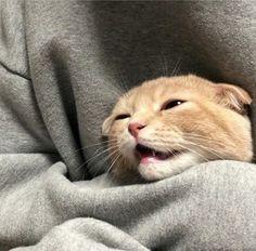 pinterest || @peachypakpak Cute Cats, Pretty Cats, I Love Cats, Funny Cats, Baby Animals, Animals And Pets, Cute Animals, Cat Memes, Memes Chistosisimos
