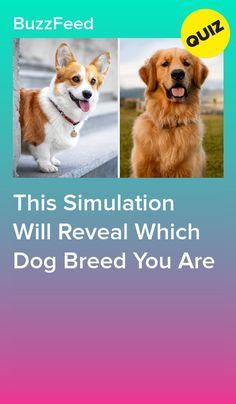 Dog Quizzes, Funny Mind Tricks, Dog Treat Jar, Secret Location, What Dogs, Little Puppies, Dog Show, Dog Park, Dog Friends