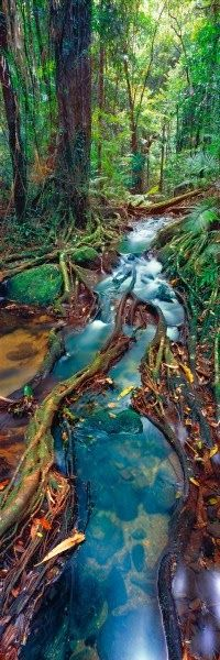 Rainforest, Queensland, Australia. By Ken Duncan. For amazing adventure holidays in Australia, click here: http://www.awin1.com/awclick.php?mid=2651&id=119939