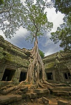 Angkor Wat in Cambodia.Angkor Wat was first a Hindu, then subsequently, a Buddhist temple complex in Cambodia and the largest religious monument in the world. Ta Prohm, Places To Travel, Places To See, Places Around The World, Around The Worlds, Beautiful World, Beautiful Places, Natur Wallpaper, Jungle Temple
