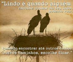 Lindo é quando alguém escolhe pousar ao teu lado, podendo voar, podendo encontrar até outro ninho, outros tantos caminhos, escolher ficar. #amor