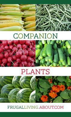 Teach kids at a young age about Companion Planting | Companion Plants List