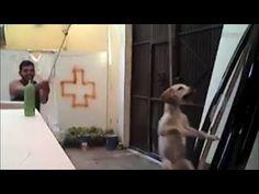 Su Facebook Animali Maltrattati e nessuno Fa Niente!! Basta!!!