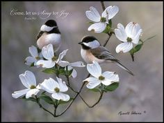 "Mounted Print-Springtime Chickadees (16""x12"") P Graham Dunn"