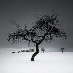The Minimalism of Winter II I Heiko Gerlicher I Fotografia I Imprescindibles de Behance I Makamo