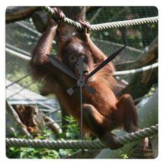 Baby Orangutan - Hang in there Square Wall Clock