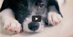 O que muita gente parece não entender sobre ter um cachorro é que se trata de uma conexão emocional....