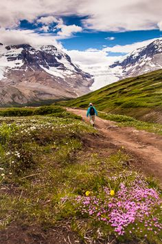 Hiking Wilcox Pass, high above the IceFields Parkway