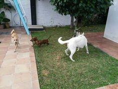 Ratos en casa Erika, Rocco, Brown y Chico 12/17