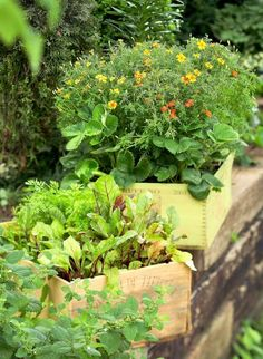 Recycle flea-market finds, wooden boxes, garden accessories, kitchen bowls and more into fun container gardens.
