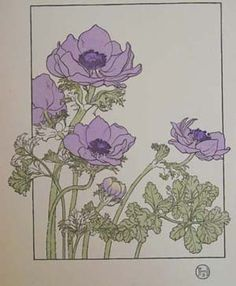 Purple Anemone. J Foord