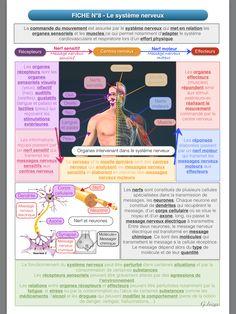 Le systeme nerveux - Révision du programme de 4eme pour le brevet de SVT Reading Practice, Microbiology, Biotechnology, Science Education, Speech Therapy, Pharmacy, Physique, Anatomy, Medical
