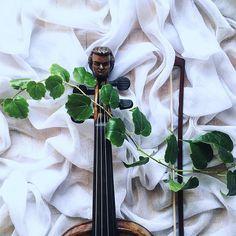 Muzyka spotyka się z naturą. Ujęcie pierwsze.  PS. Jest coś do posłuchania w Instastory!  Music meets Nature  ____________ #violinist | #skrzypce | #tv_nature | #creativeminds | #rosliny | #flatlayoftheday | #shotwithlove | #9vaga_stillife9 | #naturalart | #instrument | #luthier | #orchestra | #musicianlife | #musicofnature | #violino | #bow | #simpleandstill | #tv_stilllife | #pretty_shotz | #prestige_pics_ | #lovely_squares_1 | #livecreatively | #livebeautifully | #jj_naturelovers…