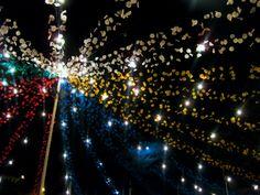 Festivities of St. Anthony, Lisbon, Portugal