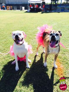 Two Tutu Time! | First Coast No More Homeless Pets | #dogtoberfest2014 #fcnmhp