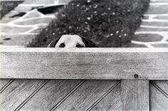 Elliott Erwitt Dogs | Elliott Erwitt's Dogs — Your Holistic Dog