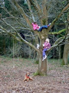 tree climbing...always was a favorite