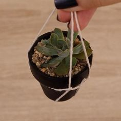 Suculentas Diy, Cactus, Instagram, Internet, Plants, Shape, Indoor Succulents, Hanging Succulents, Growing Succulents