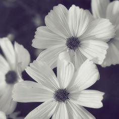 Simple yet beautiful :)