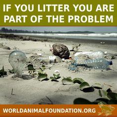 http://www.worldanimalfoundation.org/