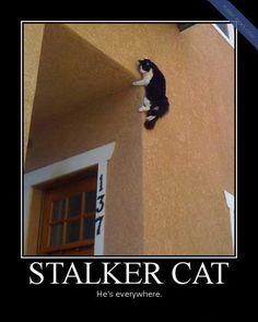 Stalker Cat Funny Picture