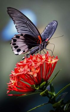 Butterfly Feeding on Beautiful gorgeous pretty flowers