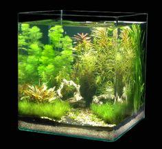 Nano Aquarium für die Küche