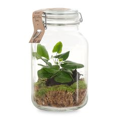 8 Tips to Get Your Kids Enjoy Home Gardening Small Watering Can, The Clumps, Garden Journal, Cool Plants, Aquaponics, Cool Toys, Stuff To Do, Allergies, Mason Jars
