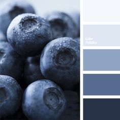 colour of blackberries, colour of blueberries, colour solution, dark and light shades of blue, dark-blue, deep dark blue colour, light blue, light dark blue, monochrome blue colour palette, monochrome colour palette
