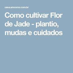 Como cultivar Flor de Jade - plantio, mudas e cuidados