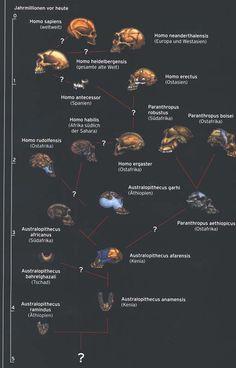arbol genealogico hominidos - Buscar con Google