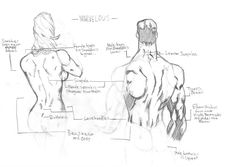 The Human Back by Atlas0 on DeviantArt