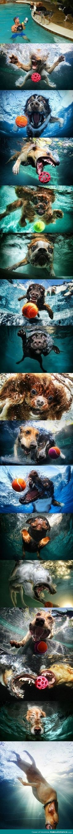 Dogs underwater-April for your under water camera
