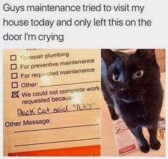 50 Cat Memes Hot And Fresh Out The Kitchen For Another Glorious Caturday - lustig - Cats Cute Funny Animals, Funny Animal Pictures, Funny Cute, Cute Cats, Meme Pictures, Humor Animal, Animal Memes, Funny Cat Memes, Tumblr Funny