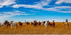 Remember the City Slickers movie? It's time to unleash your inner cowboy or cowgirl and join us next month in Kansas for our Roadtreking Roundup, a chance to boondock on the prairie on a working cattle ranch and even participate in a cattle drive. Hurry, though. While tickets are still available, they will go fast!