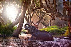Animais Fofos no Banho- Que delícia! Adoro cada banho!