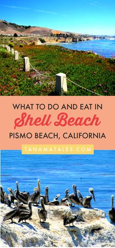 Things to do in Pismo Beach, – Travel tips and ideas – Shell Beach, a neighborhood of Pi Usa Travel Guide, Travel Usa, Travel Tips, Travel Ideas, Travel Articles, Canada Travel, Pismo Beach California, California Travel, Southern California