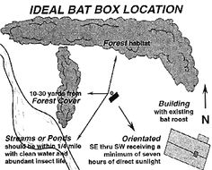 to Choose a Bat House Location Ideal Bat Box LocationIdeal Bat Box Location Outdoor Projects, Garden Projects, Bat House Plans, Bat Box Plans, Build A Bat House, Forest Habitat, Bat Habitat, 3d Cnc, Birds And The Bees