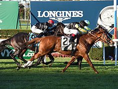 Messi and jockey John Velazquez caught longshot Cage Fighter in the final jump of the $200,000 Knickerbocker Stakes (gr. IIIT) on Saturday, Oct. 10, 2015 at Belmont Park.
