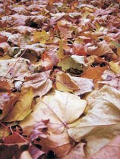 Protect Your Organic Garden With Mulches and Cover Crops