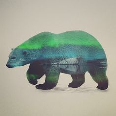 Blue and Green Bear