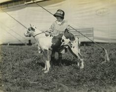 Dog Show - 1919 Delaware State Fair